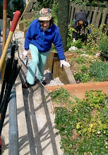 Photo: Hidden Garden Steps garden volunteer Merilyn Preston onsite (16th Avenue, between Kirkham and Lawton streets in San Francisco's Inner Sunset District) for the April 12, 2014 monthly Steps clean-up and garden-maintenance event. New and returning volunteers are welcome to join these volunteer-driven community-based efforts on the second Saturday of each month from 1- 3 pm.   For more information about the Steps, please visit our website (http://hiddengardensteps.org), view links about the project from our Scoopit! site (http://www.scoop.it/t/hidden-garden-steps), or follow our social media presence on Twitter (https://twitter.com/GardenSteps), Facebook (https://www.facebook.com/pages/Hidden-Garden-Steps/288064457924739) and many others.