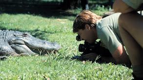 Search for a Super Croc thumbnail
