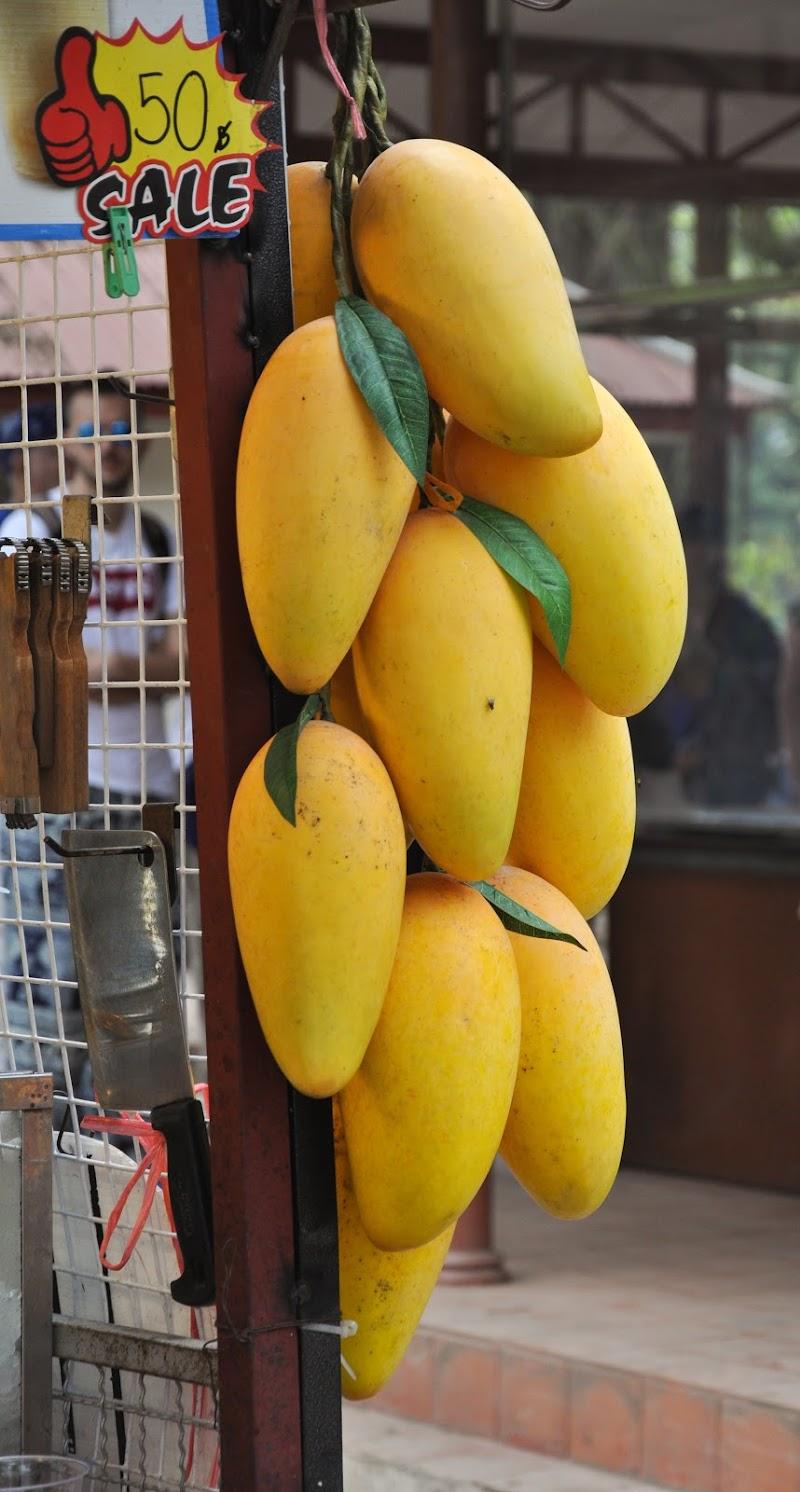 Il Mango di Zoe