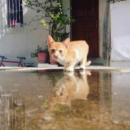 by Arber Shkurti - Novices Only Pets