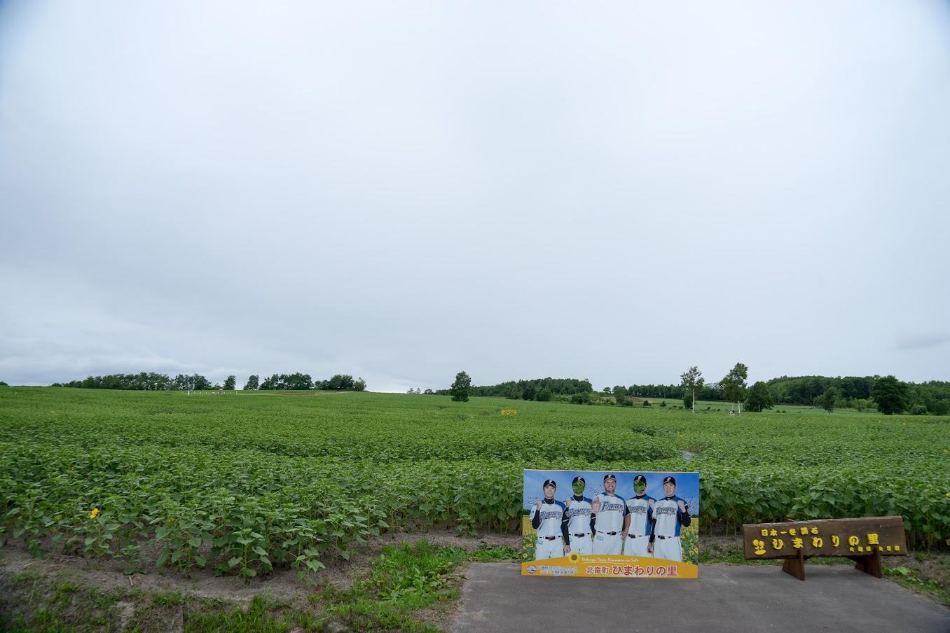 北海道日本ハムファイターズ179市町村応援大使