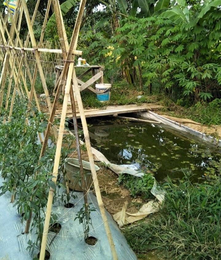 kolam tampungan air di lahan pertanian