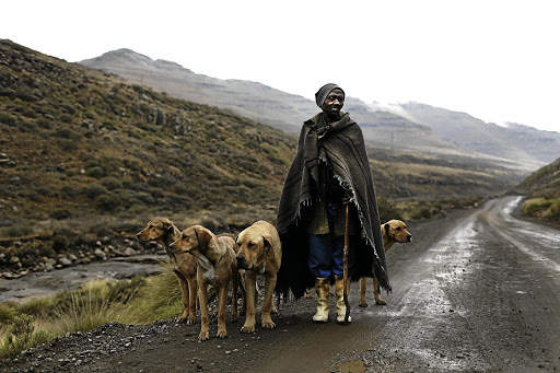 A Basotho man walks his dogs through an isolated mountain pass in Lesotho.