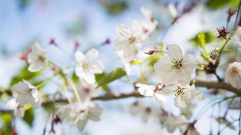 Un ramo... fa primavera di Skarlet