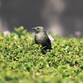 by Ruben Guerrero - Animals Birds