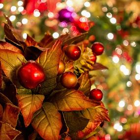 Christmastime! by Jun Robato - Public Holidays Christmas ( still life, christmas, holidays, nikon 1, bokeh )
