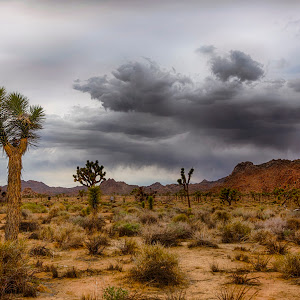 Joshua Tree clouds storm.jpg