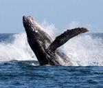 Hermanus Whale Festival : Hermanus, South Africa