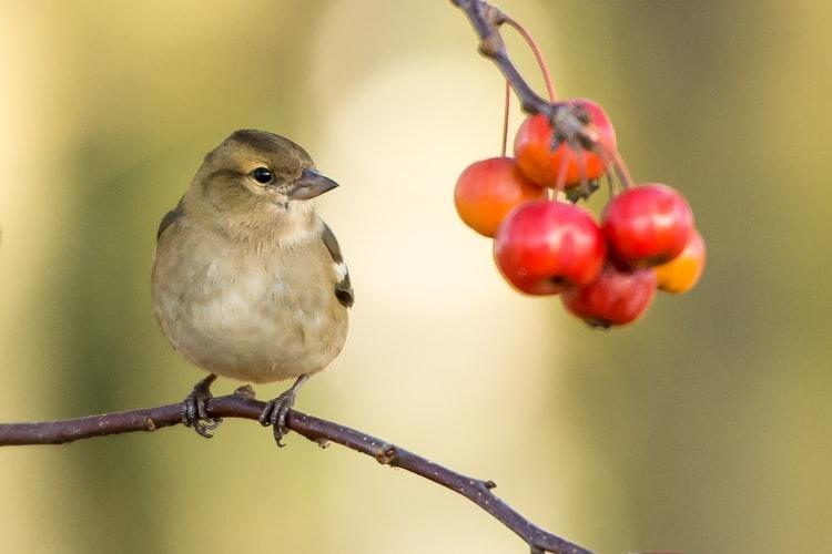 E:\sparrow.jpg