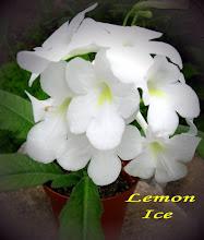 Photo: Lemon Ice
