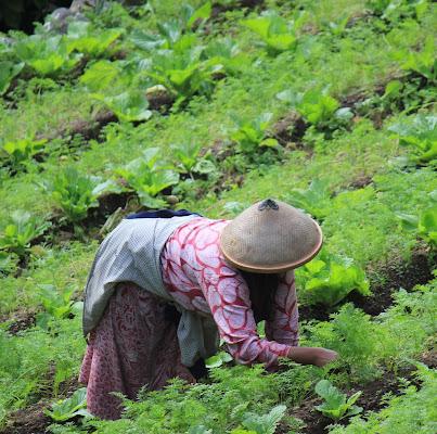 speranza di un buon raccolto .... di Marian