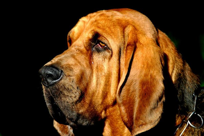 Rufus di MCPhoto