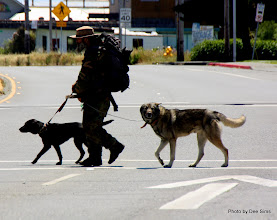 Photo: (Year 2) Day 358 - A Man and His Dogs