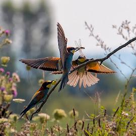 Prepir by Milan Mihalič - Animals Birds