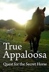 True Appaloosa