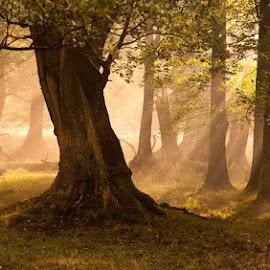 by Mads Arnholtz - Landscapes Forests