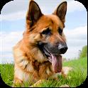 German Dog Simulator icon