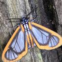 Hyalurga Moth