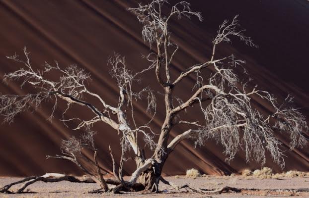 L'albero e la duna di paolo-spagg