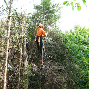 Tree Care Services Worcestshire