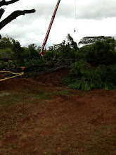 Photo: More large branches are cut down.