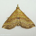 The Mallow Mursa Moth