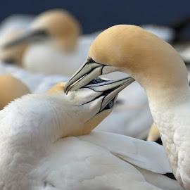 by Johana Starová - Animals Birds (  )