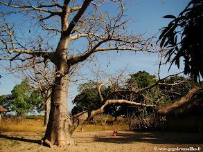 Photo: #023-Baobab