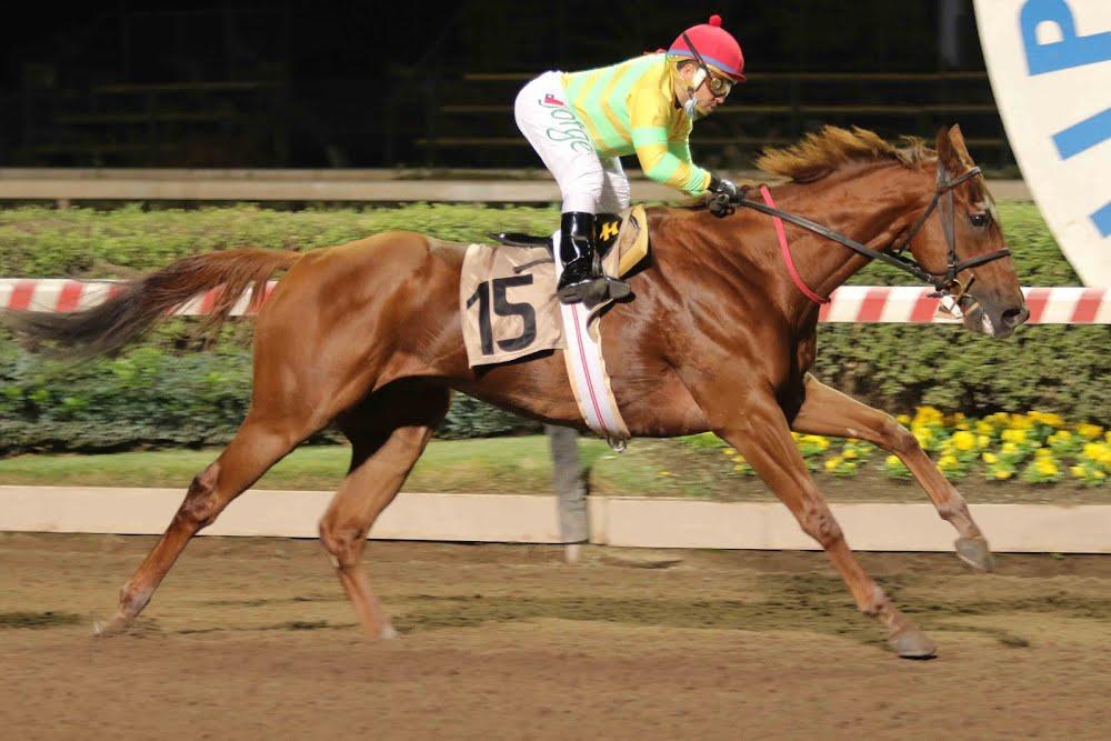 El Bebe (No Nay Never) gana Handicap (1200m-Arena-HCH). - Staff ElTurf.com