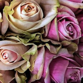 by Gina Jordan Morrison - Flowers Flower Buds