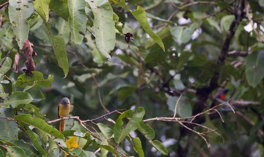 Birds of India by Nazneen (voiceofcamera.com) - Animals Birds ( nazneen.org, nazneen, voiceofcamera, voice of camera, animals, bird of nature, indian bird, bird of india, naznneen, pride of india, birds )