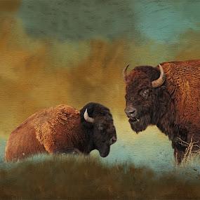 North American Bison by Rich Reynolds - Digital Art Animals ( wild, buffalo, animals, bison, antelope island, plains, salt lake city,  )
