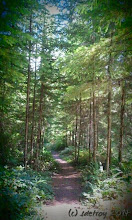 Photo: Oh my gratitude for how this feels, in the forest, on the path.