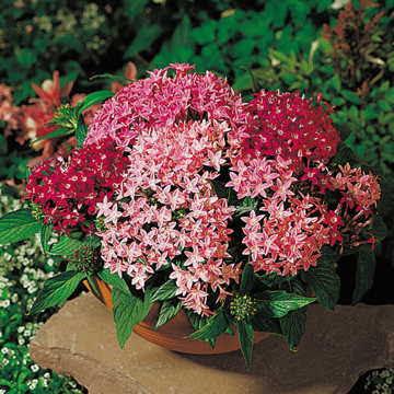 Hạt hoa diễm châu2