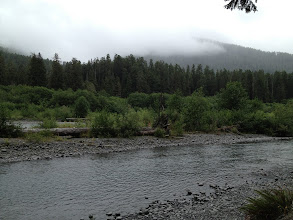 Photo: Hoh river