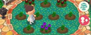 紫チューリップの画像