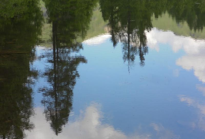 Lagusel sempreverde di Akino