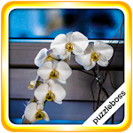 Jigsaw Puzzles: Orchid Flowers