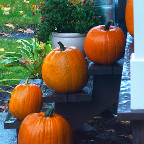 PUMPKINS by Martin Bligh - Food & Drink Fruits & Vegetables ( pumpkins, halloween )