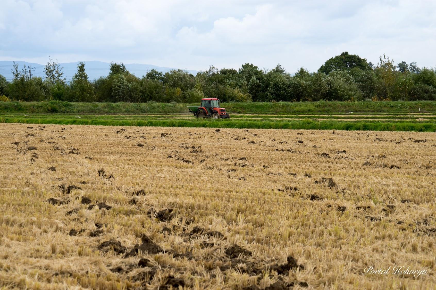 稲刈り後の圃場
