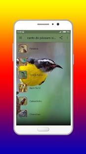 canto do pássaro sibite offline - náhled
