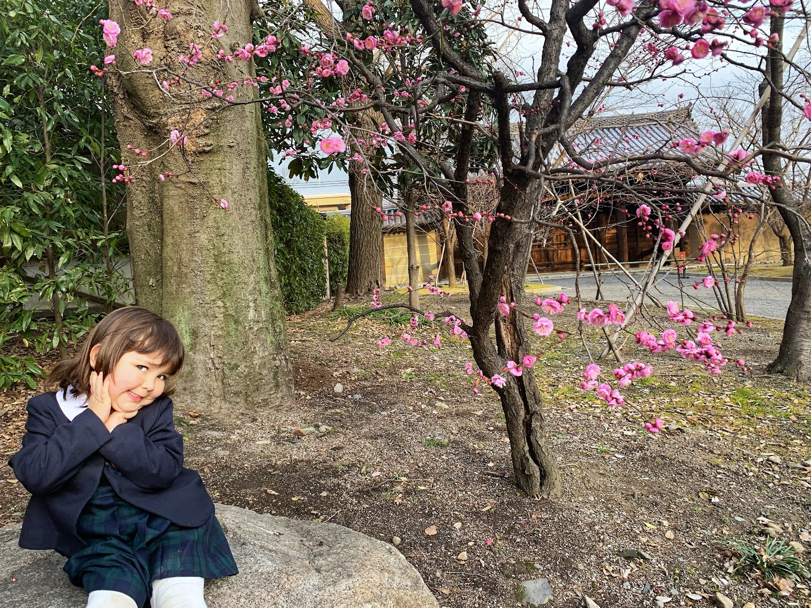 Kid enjoys the cherry blossoms