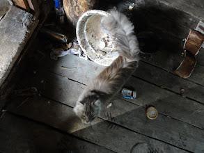 Photo: Брошенный дом в д.Лошки. Может, база рыбаков. Живет сибирская кошка, с нами не пошла.
