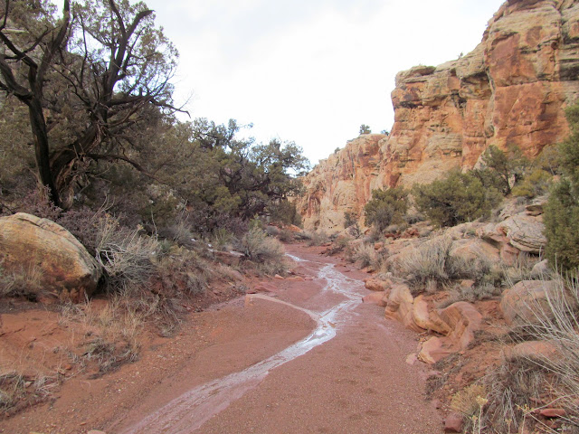 """Road"" through Cove Canyon"