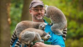 Lady Boss Lemur thumbnail