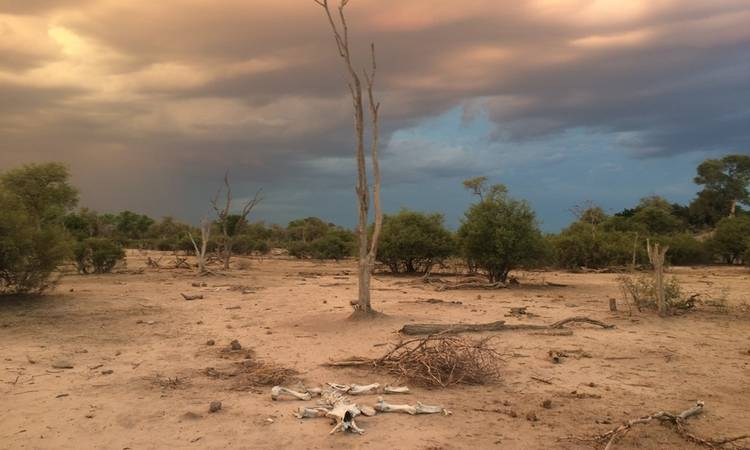 A desolate scene in the private Linyati Wildlife Reserve