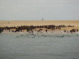 Photo: Otaries à Walvis Bay en Namibie