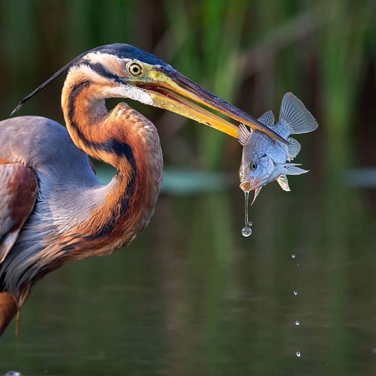 عکس از پرنده