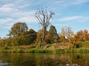 Photo: wysokie drzewko