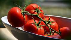 El tomate es probablemente una de las hortalizas más difundidas en el mundo